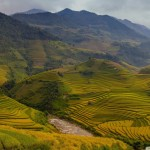 rice_terraces_vietnam-wallpaper-1920x1200